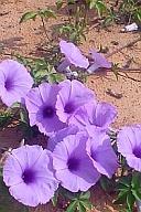 路傍の花(1)