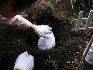 穴を掘った中に