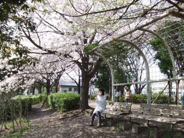 桜の木の下でランチ