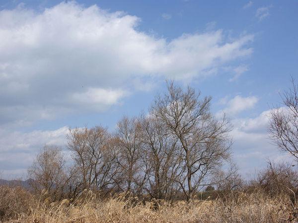 冬空と木立