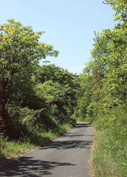 山中の道路