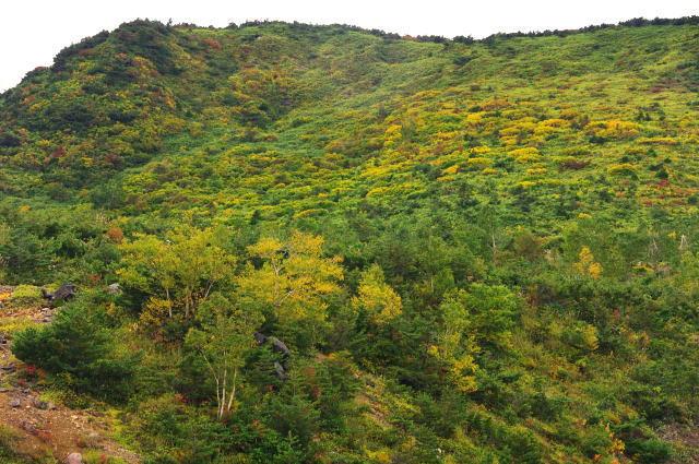蓬莱山の黄葉