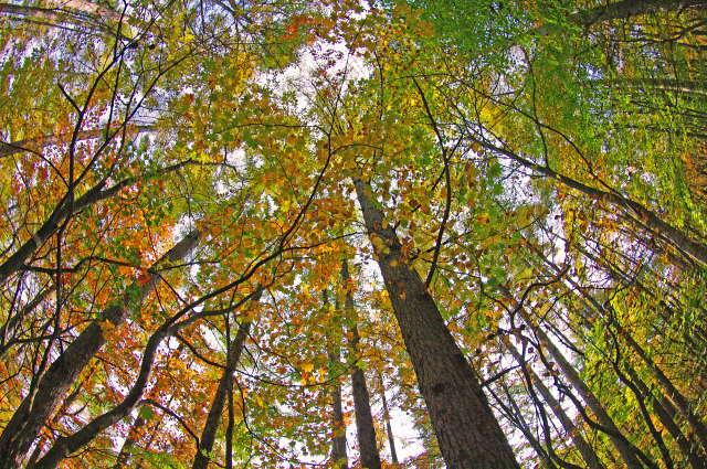 微温湯登山道の森
