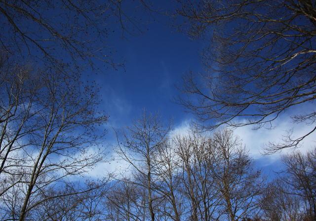 ハンノキの空