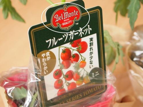 デルモンテ トマトの苗