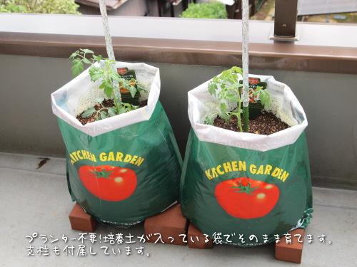 デルモンテ トマトの苗栽培キット