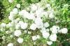 熊山英国庭園02