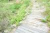 熊山英国庭園13