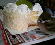 ケーキにかぶりつくピーちゃん