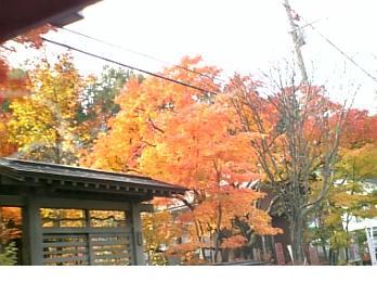 奥入瀬グランドホテル向かいの紅葉