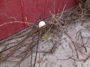 鳩の卵(残念)