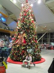 オランダらしく背高クリスマスツリー。