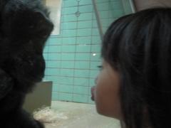 大胆なチンパンジーと小娘。