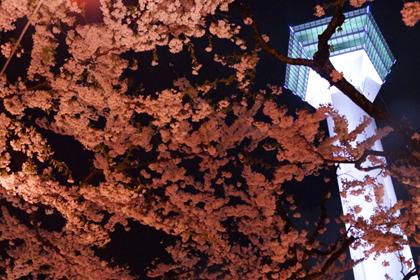 函館_2014_春_16.jpg