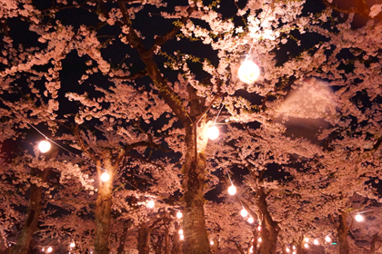 函館_2014_春_14.jpg