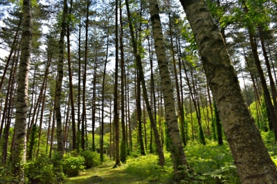 岩手県県民の森2