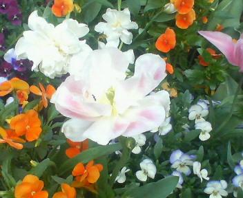 近所のなんや名前知らんけども、きれいな花