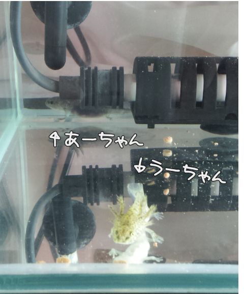 20120426-231853.png