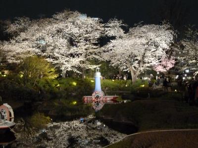 毛利庭園夜の桜