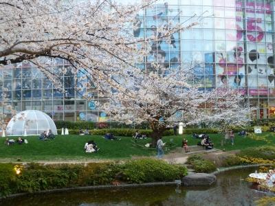毛利庭園の桜4