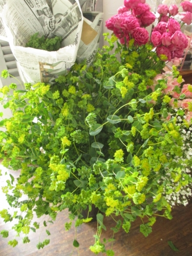 グリーンいっぱい花屋