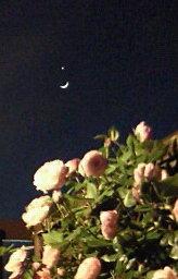 月星のマークみたいだった