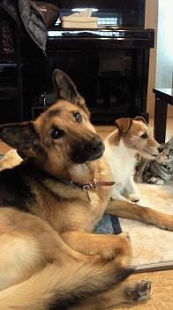 エナ、キティ、ターさん