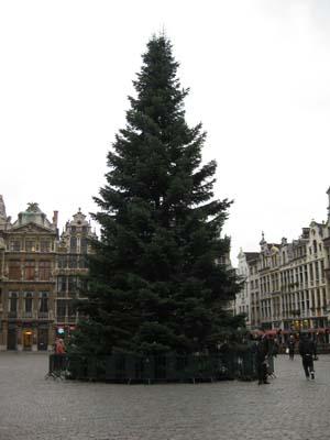 ブリュッセルの木
