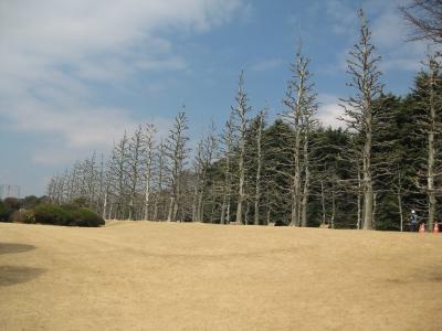 御苑2011.3