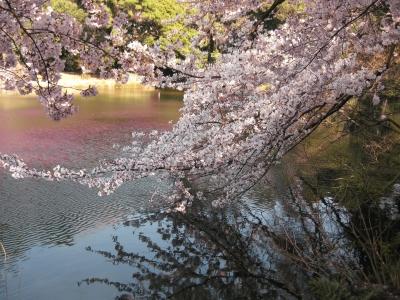 御苑2011春