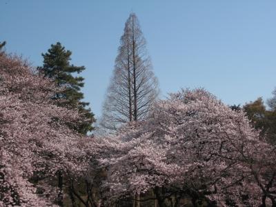 御苑2011春2