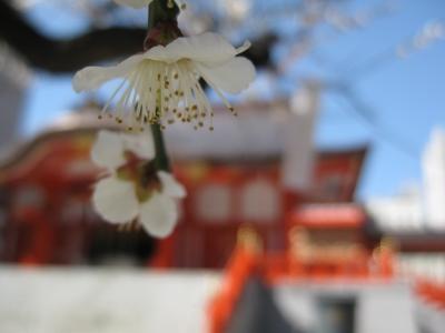 花園神社の梅