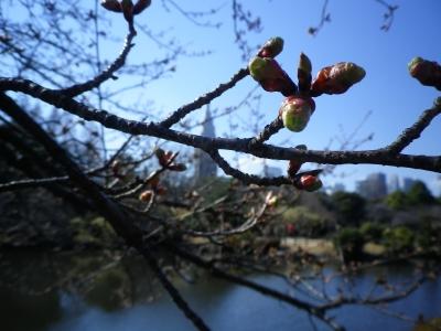 新宿御苑2013、春1