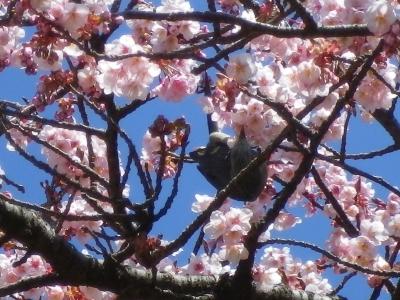 新宿御苑2013、春3