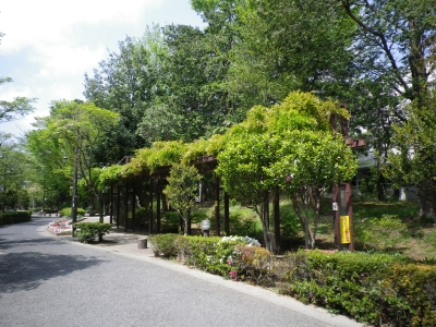 蚕糸の森 藤棚2