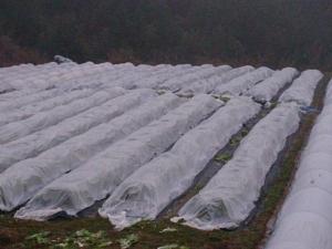 畑の様子 雨