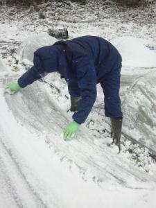 雪落とし フェロモン