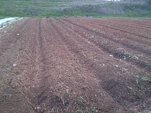 大洲畑 土作り
