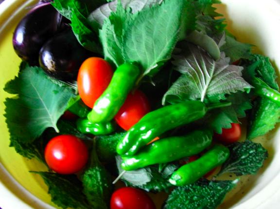 お義母さんがお庭で作って食べさせてくれる元気な野菜たち。
