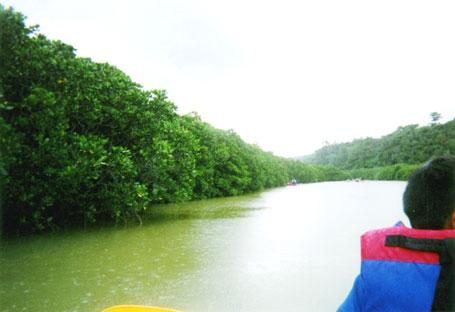 慶佐次川のマングローブ林