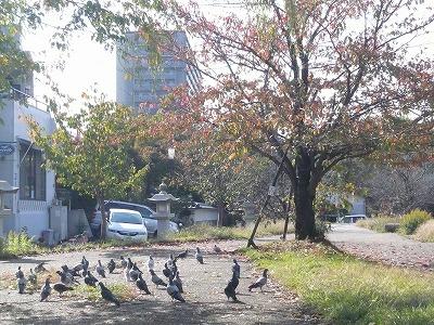 琵琶湖撮影11月12日 028.jpg