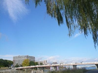 琵琶湖撮影11月12日 045.jpg
