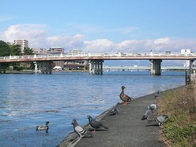 琵琶湖撮影11月12日 073.jpg