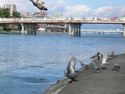 琵琶湖撮影11月12日 074.jpg