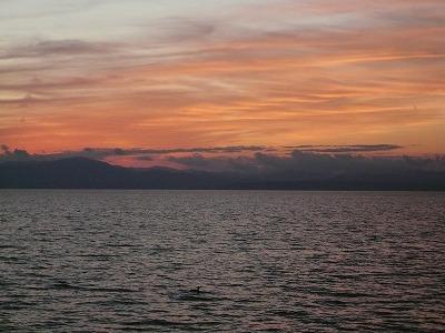 琵琶湖撮影11月12日 218.jpg