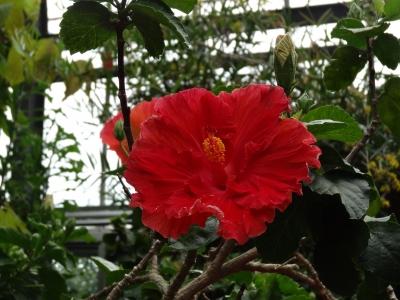 熱川 バナナワニ園 植物園