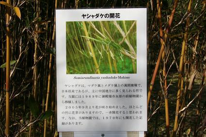 ヤシャダケの開花表示看板