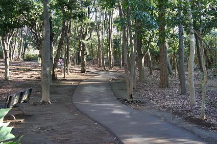 柿田川公園内の遊歩道