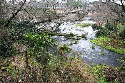 湧水の小川