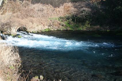 柿田川の清流